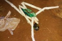 Explosivos são encontrados pela Polícia Civil em matagal de Araxá