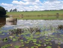 Encontrado corpo de jovem que se afogou em represa em propriedade rural às margens da BR-262