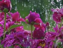 Primavera chega com chuva no Triângulo e Alto Paranaíba